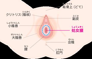 処女膜 画像 処女膜再生・処女膜破裂/仙台中央クリニック